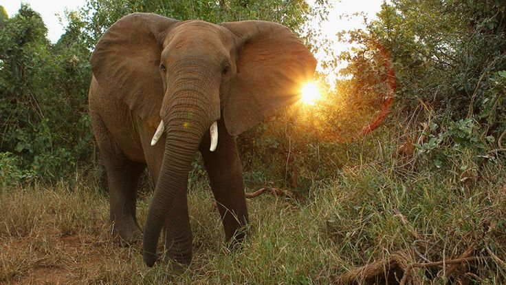 """According to a report from South African news outlet News24, a 51-year-old professional big game hunter met his demise on Friday when he was crushed by an elephant. And hey, I'm sure the possibility of that happening is what made his game so """"fun."""""""