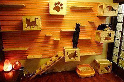 Dekorasi Kreatif Rumah Kucing