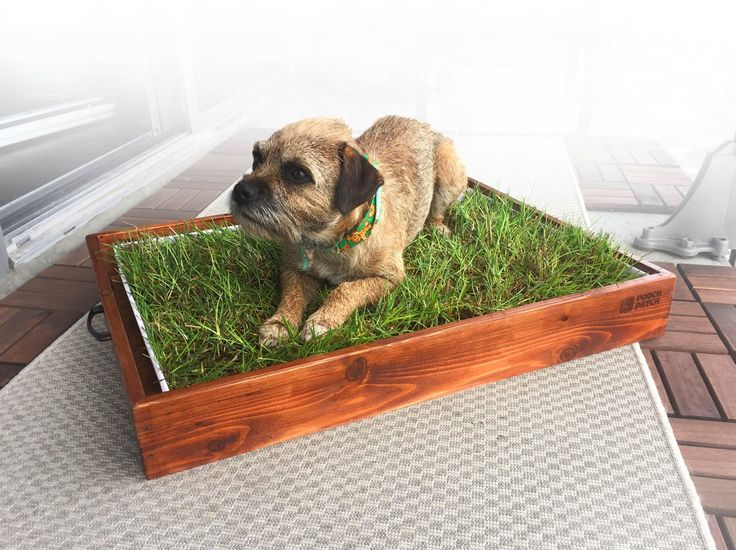 Choose Best Indoor dog Potty Pads https://goo.gl/nUKXuN Indoor dog potty is the innovative and environmentally friendly dog potty and house training system that is best for handling dog pooch. Pooch patch gives the best Indoor dog potty pads such as Pooch Patch XL, Dog Potty Litter Box, and fresh patch at affordable rates. #Indoordogpotty #Dogpotty #peepads