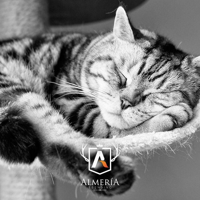 www.almeriatrending.com la guía con caracter própio de Almería. #almería #turismo_almería #fotos #photo #guia_almeria #almería_trending #hipster #fashion #trending #trend #looks #photos #locations #turistic #turismo #andalucía #españa #spain #cats #cat #gatos #gato