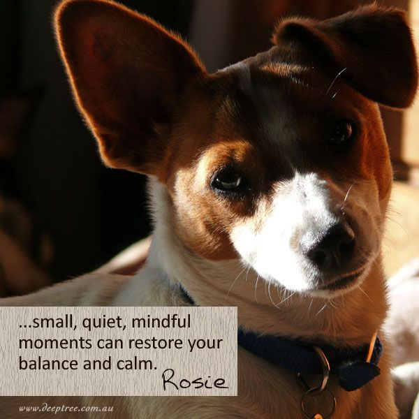 Just a few minutes of mindfulness scattered throughout your day can restore a sense of calm and balance. Try it - stop what you are doing and see what you see, hear what you hear, feel what you feel. #mindfulness www.deeptree.com.au