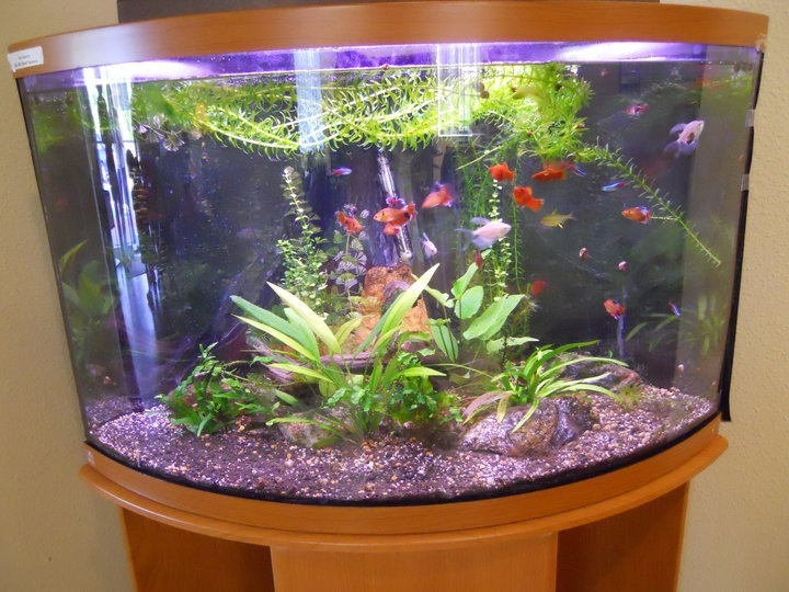 Not Sure I Like The Floating Plants But The Tank Is Nice And Clear.  Tropical Fish TanksAquarium IdeasPonds