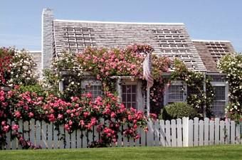 Standout Cottage Designs...  Cozy, Cute & Quaint!    Picturesque cottage designs have a special charm and ambiance that is hard to resist.    Quaint and cozy, they evoke romantic images of times  past!