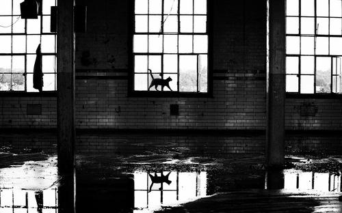 by Rich Dobson