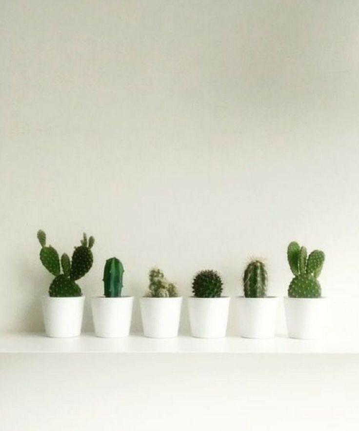 Cute Little Cactus Home Decor Inspiration Cactus Plant Decor Plants Indoor Plants