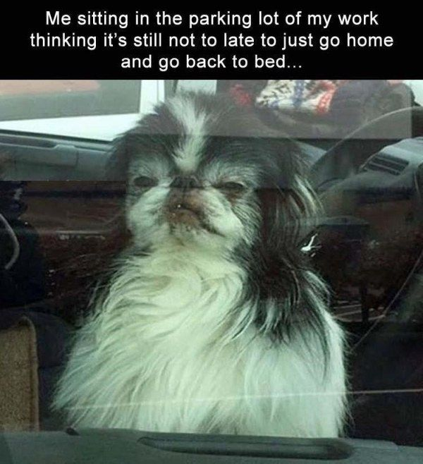 20 Funny Animal Memes For Animal Lovers Funny Animals Daily Lol Pics Funny Pictures Funny Animal Memes Funny Animals