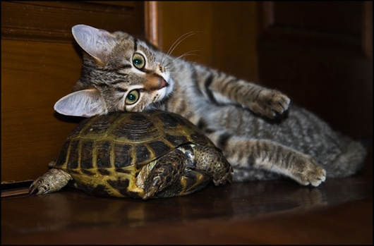 A #Cat and a #Turtle    Kitty has a weird perception of what makes a comfortable pillow.