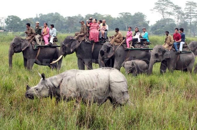 6-Day Tour of Exotic Northeast India: Mawsmai Caves, Double Decker Living Root Bridge and Kaziranga National Park This 6-day tour covers some of the most spectacular sites of  Northeast India - the mysterious Mawsmai Caves, Double Decker Living Root Bridge that is now an UNESCO World Heritage Site with the vast expanse of greenery, forests and mountains. Visit the Kaziranga National Park to see the famous one horned-rhinos and you might bump into a tiger if you are lucky.Day 1...