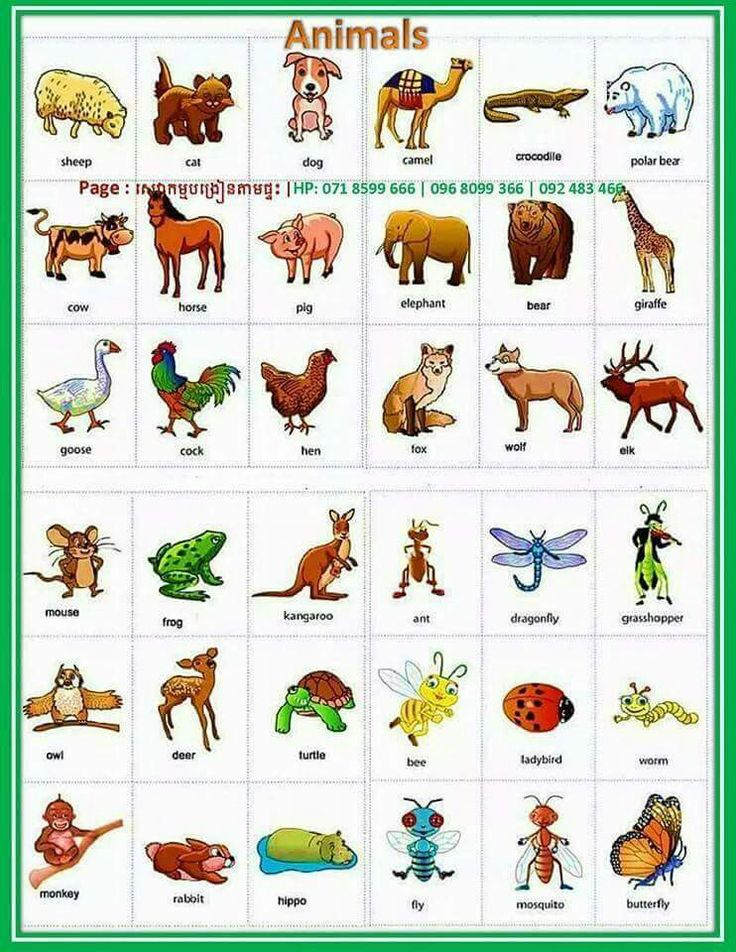 apprendre l anglais en image pdf