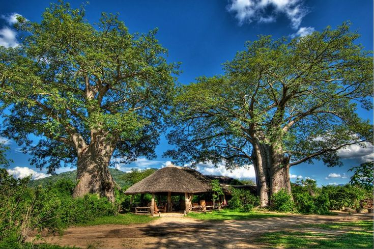 Bushmans #Baobabs. A place among the baobabs at #Liwonde National Park in Malawi. Click and check our blog post on how to enjoy your stay.