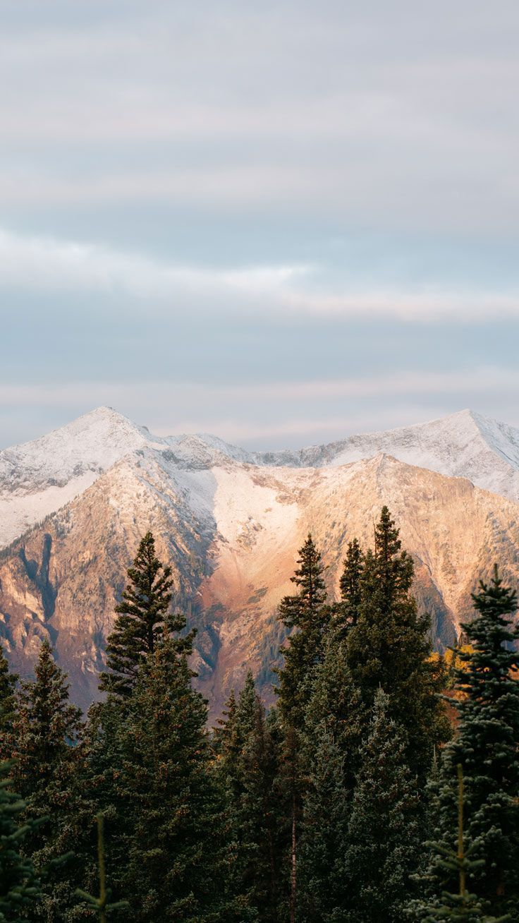 IPhone Hintergrundbild – Wüstenpalmen Fernweh Reise Wald Wald Bucketlist Berge See, wo  #berge #bucketlist #fernweh #hintergrundbild
