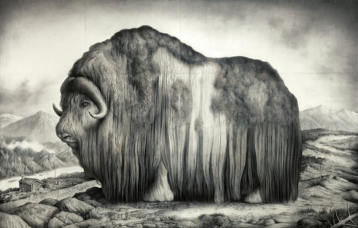 Charcoal Illustrations by Sverre Malling