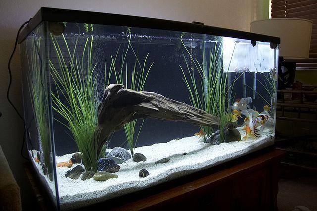 Aquarium Idea Aquarium Tropical Fish Aquarium Aquarium Fish