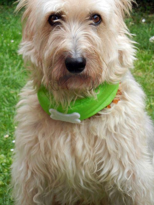· das Kühlhalsband für Hunde COOLER von houndsland gibt's in limitierter Auflage Halstücher für Hunde im Doppelgewebe genäht · dieses Bandana für Hunde kühlt einige Stunden lang · das kühlende Hundehalstuch senkt die Körpertemperatur · das Kühlhalstuch für Hunde bringt Erleichterung bei heißen Temperaturen