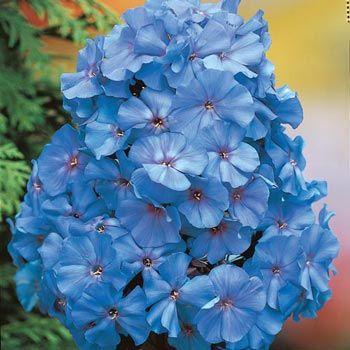 Flower Garden Ideas In Michigan 13 best plants mostly shade images on pinterest | flower gardening