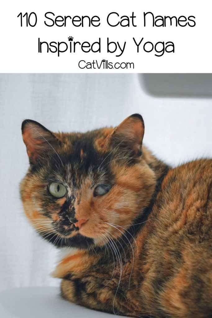 110 Serene Yoga Cat Names For Your Zen Kitty Catvills Calico Cat Names Cat Yoga Cat Names