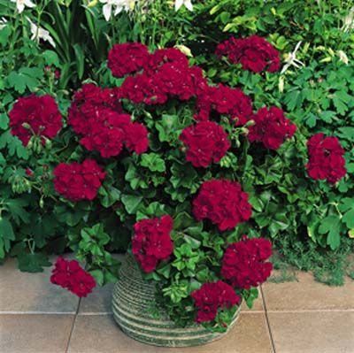 Container Gardening Ideas the simple formula for a beautiful container garden Find This Pin And More On Container Gardening Ideas