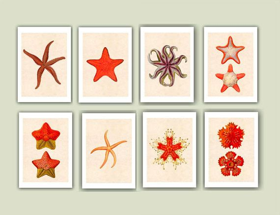 Sea stars Prints Set of 8 Matte Print 5x7  Collection by AlgaNet, $52.00