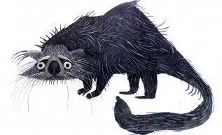 The BINTURONG • Brendan Wenzel  || This vulnerable species carnivorous nocturnal mammal is found in Bangladesh, Bhutan, Burma, Cambodia, China, India, Indonesia, Laos, Malaysia, Nepal, the Philippines, Sri Lanka, Thailand, and Vietnam.