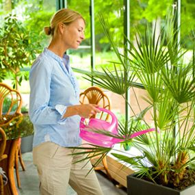 Most Useful and Beautiful Indoor House Plants for Your Home
