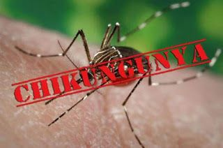 How to prevent yourself from Chikungunya ?