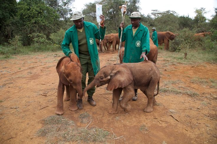 More Than 30,000 Elephants Are Killed Every Year. These Are The People Working To Save Them