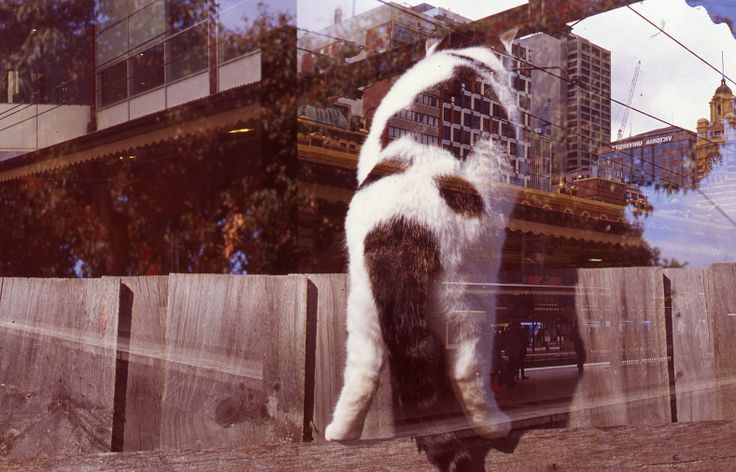 A photograph taken in 2011 of my cat that passed away. Double exposure on 35mm positive film, first time experimenting with multiple exposures. One exposure taken in my backyard, the other in Mebourne city, unedited and also scanned backwards by mistake.