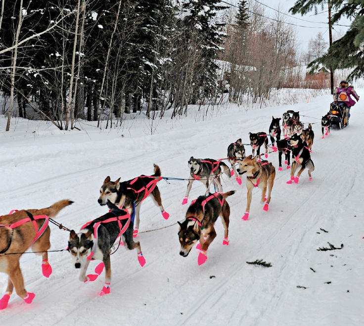 Sled Dog Pictures To Print