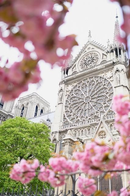 | P | Springtime in Paris - The Rose Window of Notre Dame