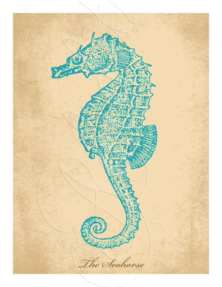 1000+ images about Sea Horse on Pinterest | Watercolors, Eric ...