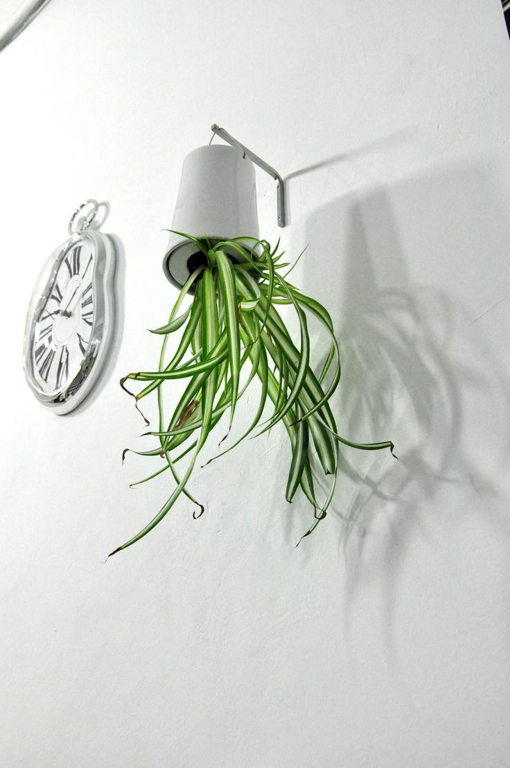 Productos - Boskke Sky Planter - Un alza revolucionaria abajo plantador auto-riego ()