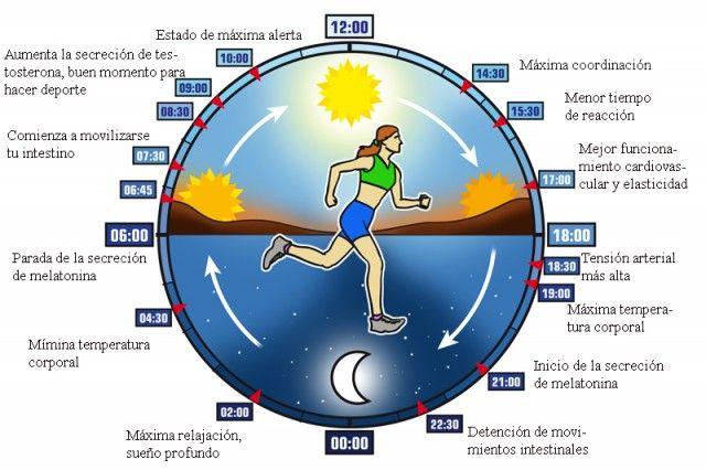 ciclos circadianos