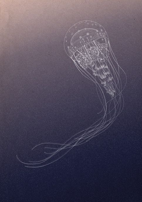 Jellyfish via brolletprascida, #illustration