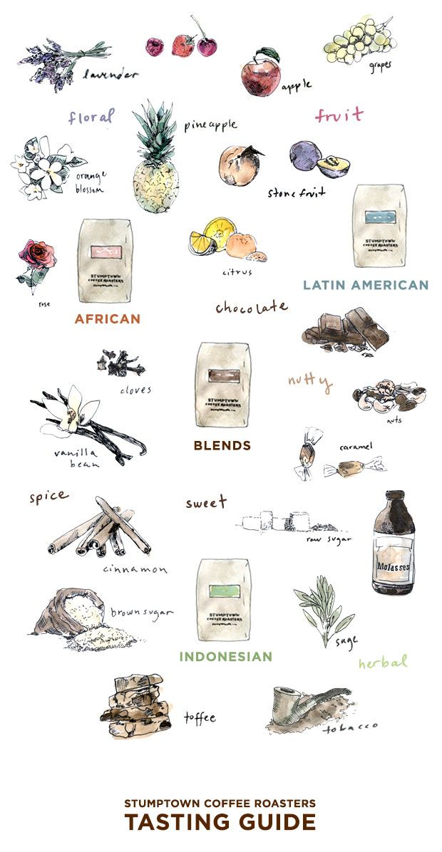 Stumptown Coffee Roasters Tasting Guide | We get asked lots of questions about how best to navigate our coffee menu and flavor notes. We recommend using this guide as a starting place to help you find out which type of coffees you will like best or to begin to describe coffees you already know and love. #illustration