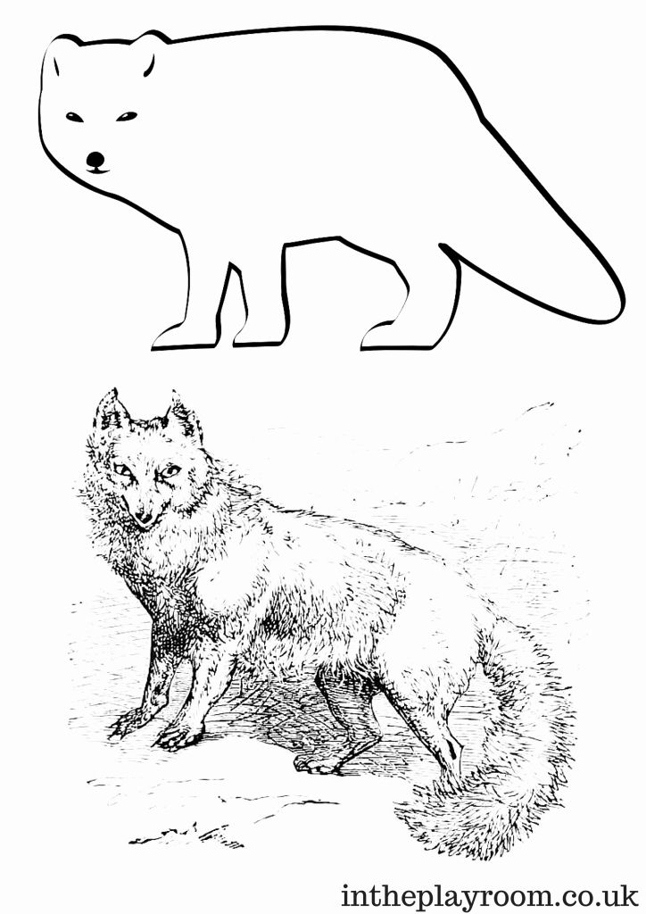Arctic Fox Coloring Page Awesome Arctic Animals Colouring Pages In The Playroom In 2020 Fox Coloring Page Animal Coloring Pages Arctic Animals