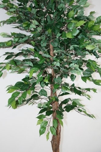 green ficus tree artificial plant