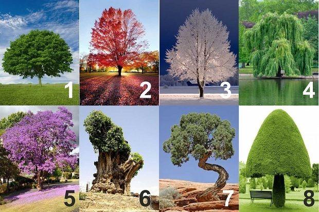 Ez a személyiségteszt betekintést enged lelked legmélyebb, eddig titkolt részleteibe. Válassz egy fát és nézd meg, milyen is vagy valójában...