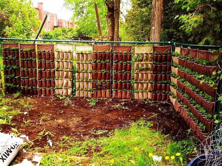 280 strawberry plants in this vertical set up in backyard via gardening living