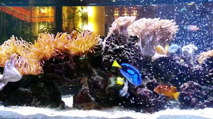 17 best ideas about saltwater tank on pinterest fish for Saltwater fish tanks for beginners