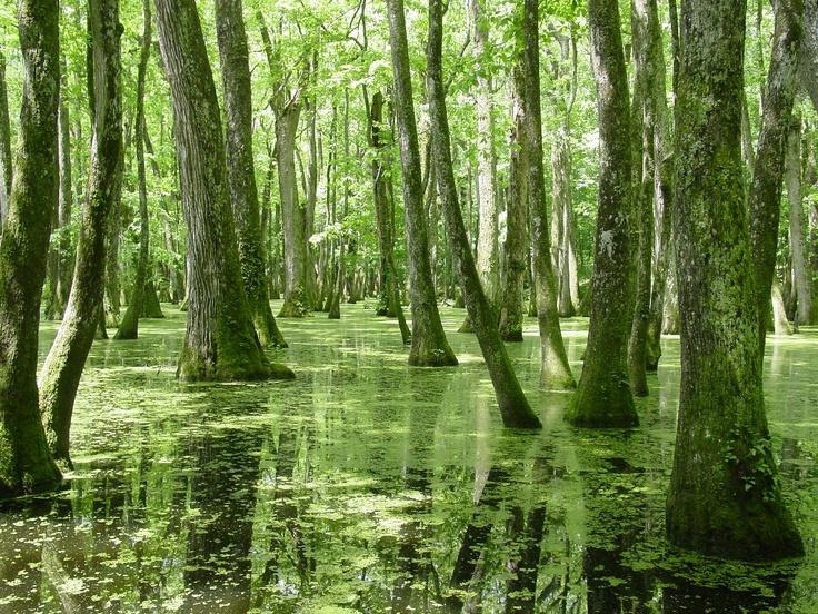 Swamp along the Natchez Trace Parkway