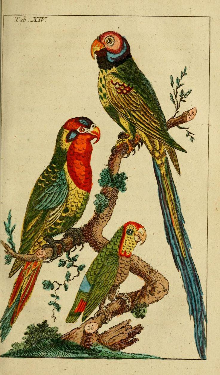 T 1 - Unterhaltungen aus der Naturgeschichte. - Biodiversity Heritage Library