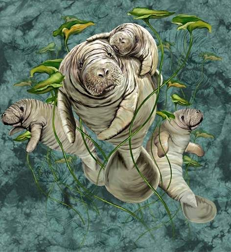 Hidden eleven manatee images by Stephen Michael Gardner will expand your mind and balance your brain hemispheres.