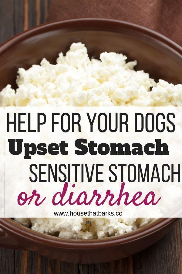 Upset Tummy And Diarrhea Recipe Dog Food Recipes Homemade Dog