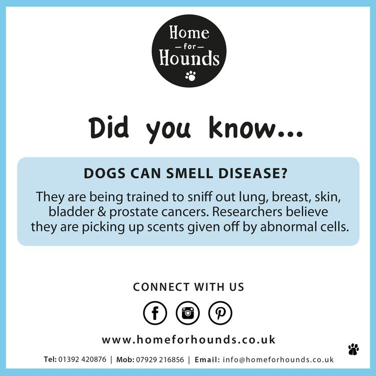 Did you know, dogs can smell disease? #factoftheday #knowyourdog #trainyourbrain #doglove #dogdaycare #homeforhounds