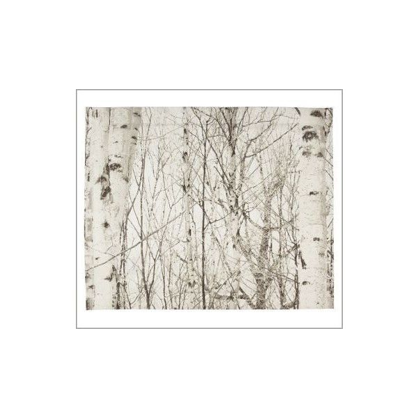 Birch Tree Organic Duvet Cover & Sham | Pottery Barn found on Polyvore featuring polyvore, home, bed & bath, bedding, bed accessories, pottery barn shams, pottery barn bedding, organic bed linen, pottery barn pillow shams and pottery barn bed linens