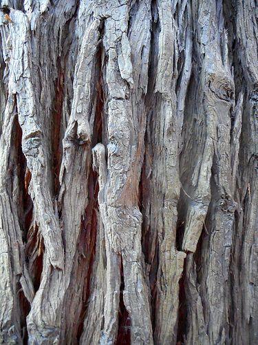 legno - corteccia 1 | da decoriciclo