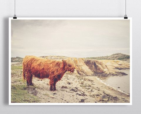 Hairy Cow – Such A Poster