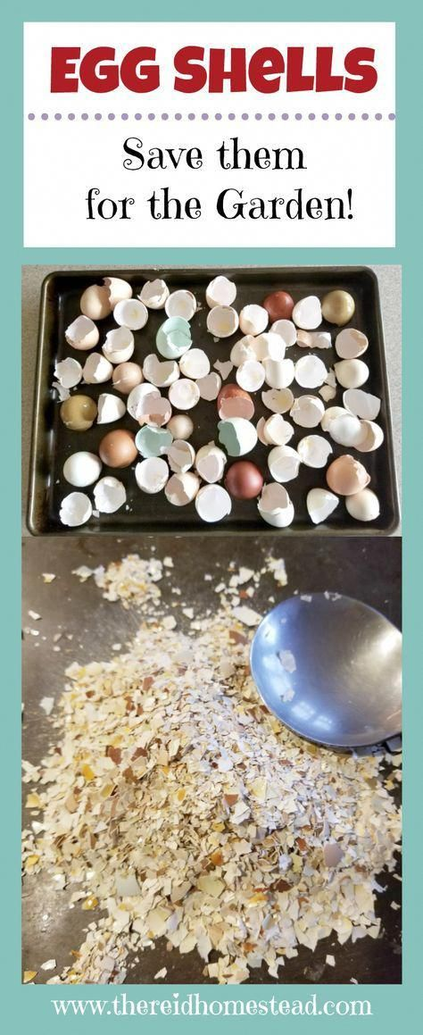 How to Use Eggshells in the Garden (to benefit your plants