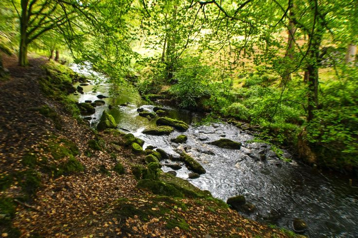 Taken at Hardcastle Crags a woodland managed by the National Trust Nr Hebden Bridge, West Yorkshire. View my blog at, www.colingreenphotography.blogspot.co.uk. Picture Copyright © 2017 Colin Green All Rights Reserved