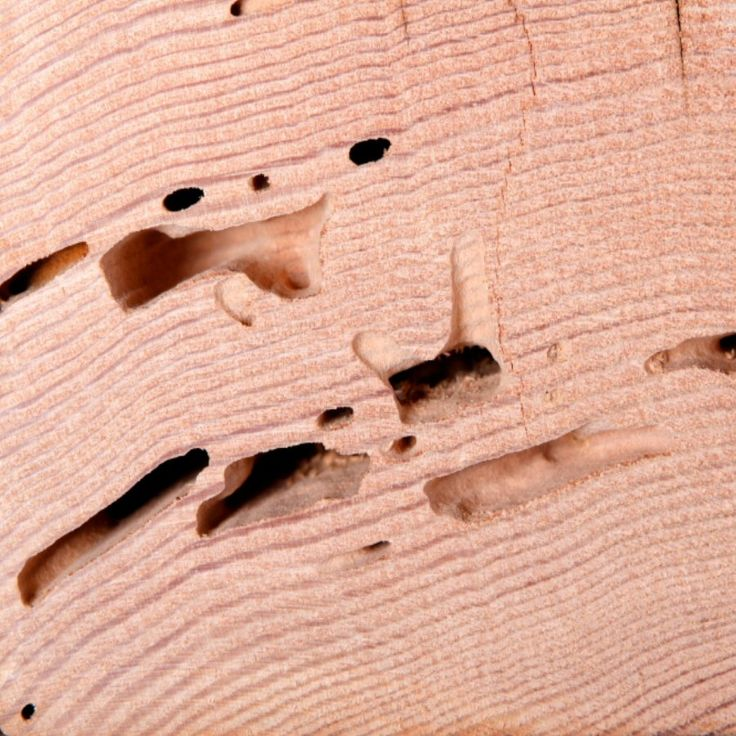 27 Best Images About Termite Damage Dallas Fort Worth On